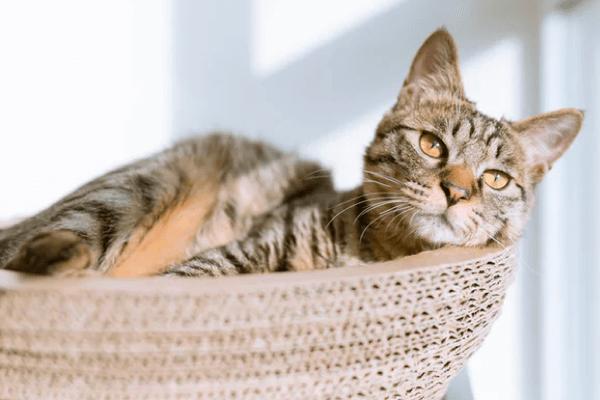 Virtual Cat Behavioural Consultation