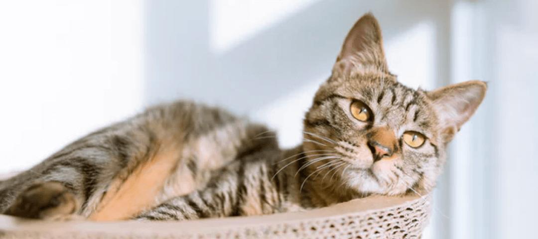 Cat Behaviour Consultation